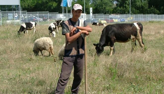 Foto: 9.700 de crescători de animale nu vor mai achita debitele stabilite abuziv de camerele de conturi
