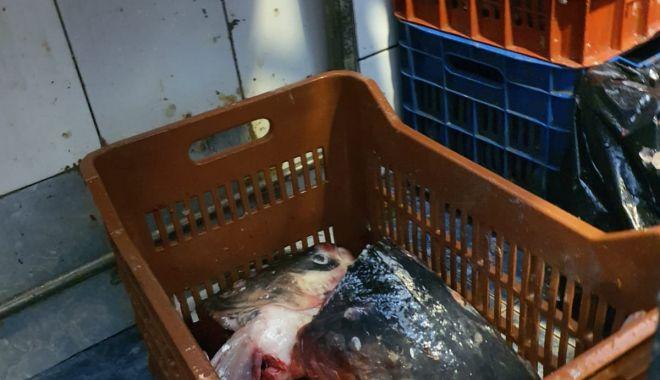 Galerie foto / Control la vânzătorii de pește. Mai mulți agenți economici, amendați - 9af3f1b86c0b48678d42211152e7a396-1588230463.jpg