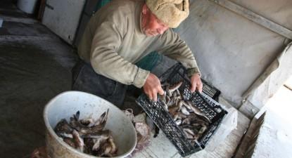 Foto: �oseaua de coast� se poticne�te �n colibele pescarilor