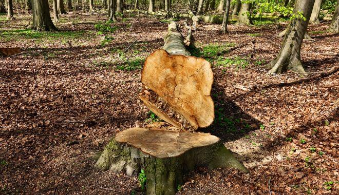 Foto: Moarte cumplită pentru un muncitor! A murit strivit de un copac pe care îl tăia