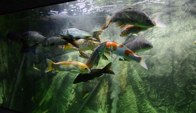 Vreți să vedeți peștișorii de la Acvariu? Care este programul de vizitare - acvariu101-1533734754.jpg