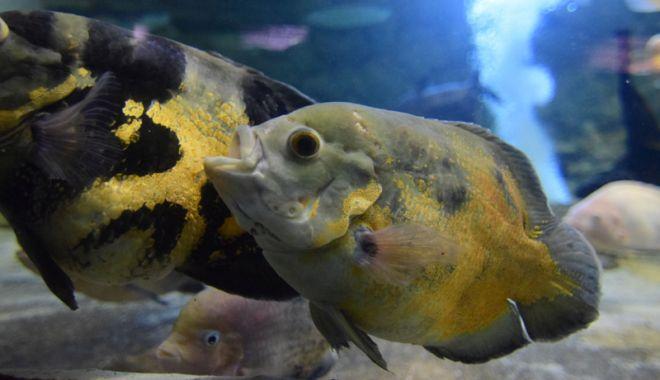 Vreți să vedeți peștișorii de la Acvariu? Care este programul de vizitare - acvariu35-1533734707.jpg