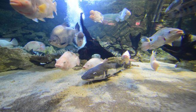 Vreți să vedeți peștișorii de la Acvariu? Care este programul de vizitare - acvariu46-1533734716.jpg