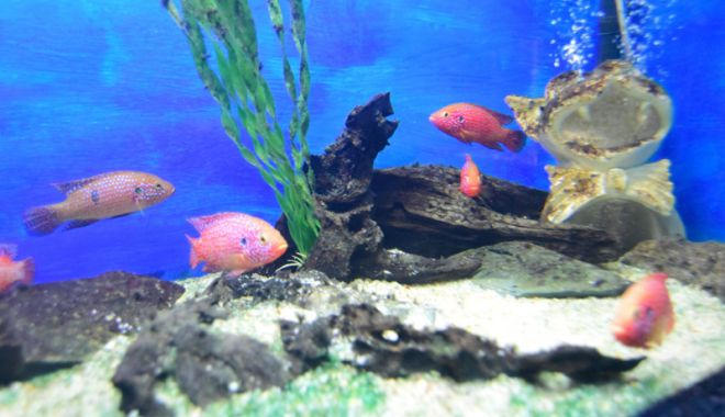 Vreți să vedeți peștișorii de la Acvariu? Care este programul de vizitare - acvariu65-1533734735.jpg