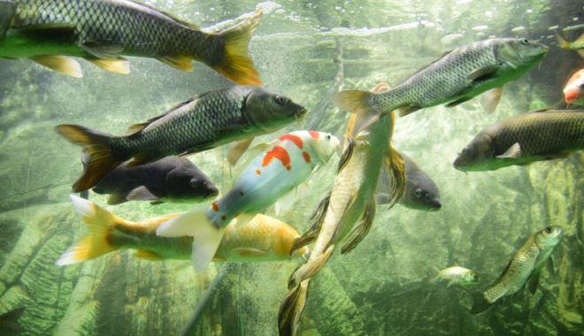 Vreți să vedeți peștișorii de la Acvariu? Care este programul de vizitare - acvariu73-1533734745.jpg