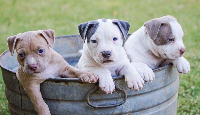 Foto: Administrația locală  a stabilit cum vă puteți recupera câinii luați  de hingheri
