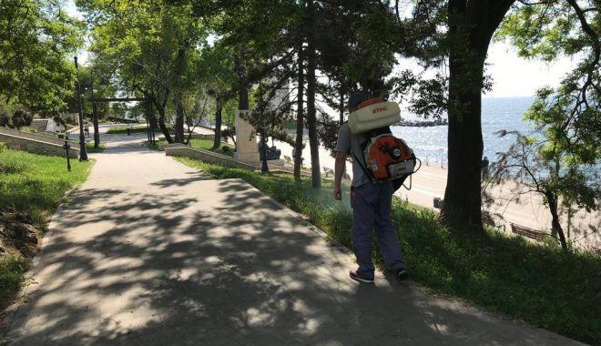 Foto: Administrația locală din Constanța continuă acțiunile de dezinsecție