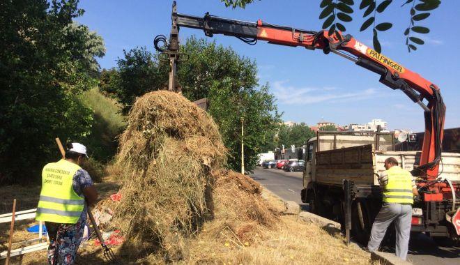 Administrația locală continuă lucrările de igienizare în cartierele din Constanța - administratialocala-1561399292.jpg