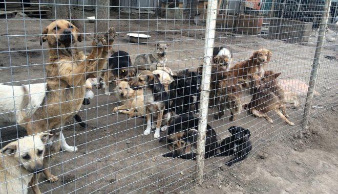 Foto: Administrația locală continuă campania de adopție a câinilor fără stăpâni