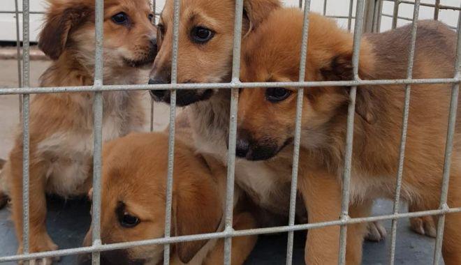 Adopţii rapide, la adăpostul pentru câini fără stăpân, din Constanţa - adoptiirapide-1611503450.jpg