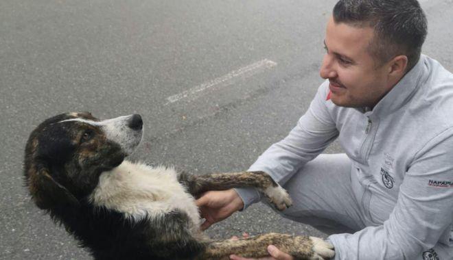 Foto: Câinele care a salvat un biciclist accidentat a fost adoptat