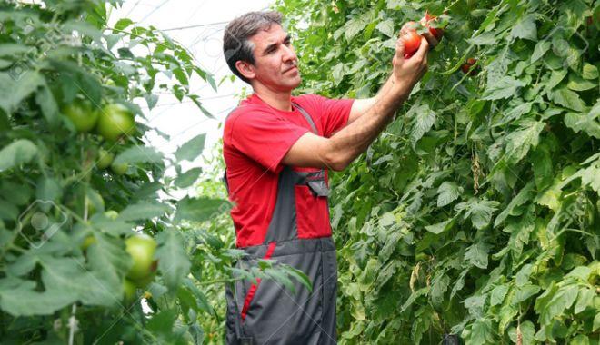 Foto: Agricultura, pe scurt
