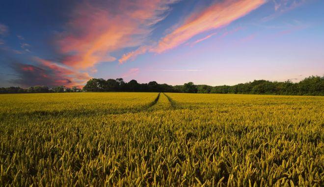 Agricultura conservativă, viitorul agriculturii tradiţionale - agriculturaconservativa-1610642127.jpg