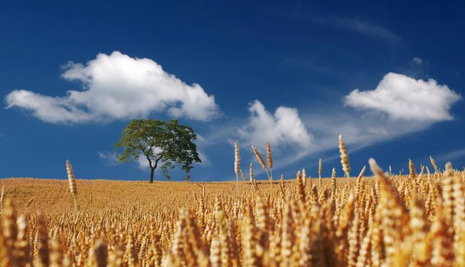 Agricultura ecologică ar putea duce la creşterea importurilor de cereale în UE - agriculturaecologica-1624558521.jpg