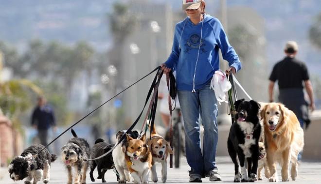 Foto: Ai câine şi nu l-ai castrat? Iată ce amenzi uriaşe te pasc