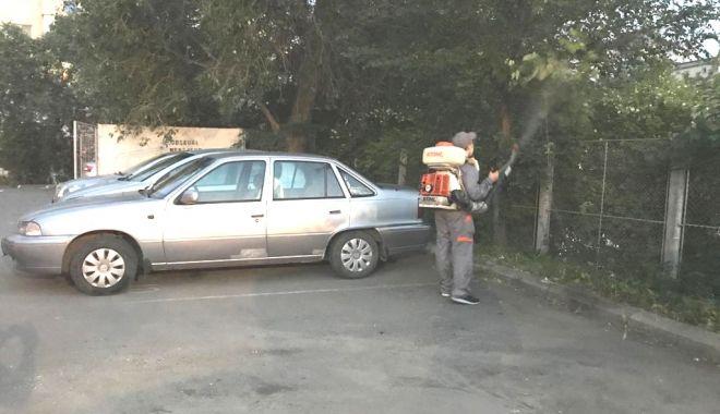 A început dezinsecţia în municipiu. Constănţenii, obligaţi să-şi deratizeze gospodăriile - ainceputdezinsectia-1559672760.jpg