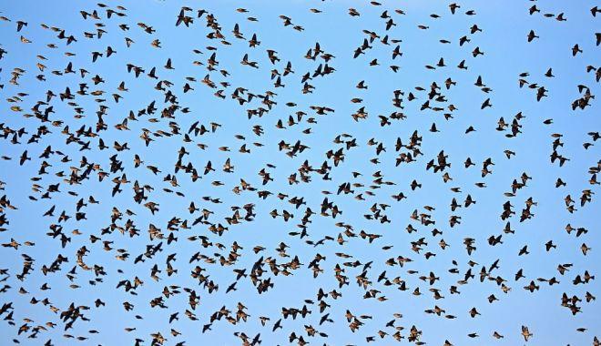 A început migraţia de toamnă a păsărilor - ainceputmigratia-1632642409.jpg