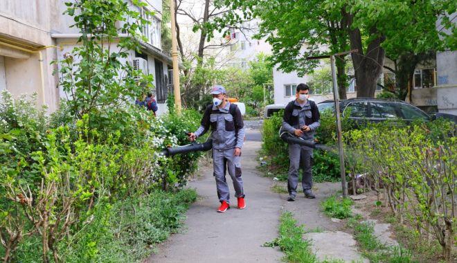 Foto: A început stropirea spațiilor verzi împotriva insectelor