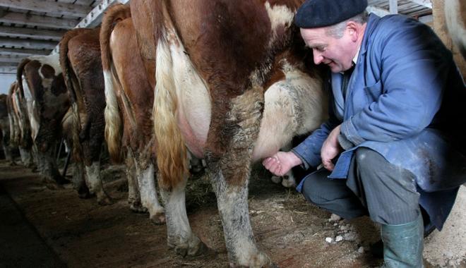 Foto: Ajutor excepţional pentru fermierii din sectorul laptelui