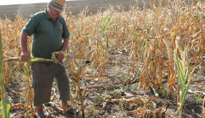 Foto: Alarmă în agricultură