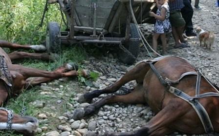 Foto: TRAGEDIE! Bărbat UCIS DE UN ROI DE ALBINE