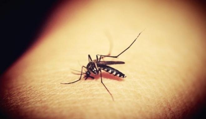 Foto: Virusul West Nile continuă să facă victime