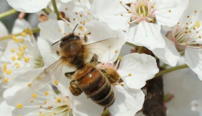 Foto: Albinele pot rezolva probleme simple de matematică