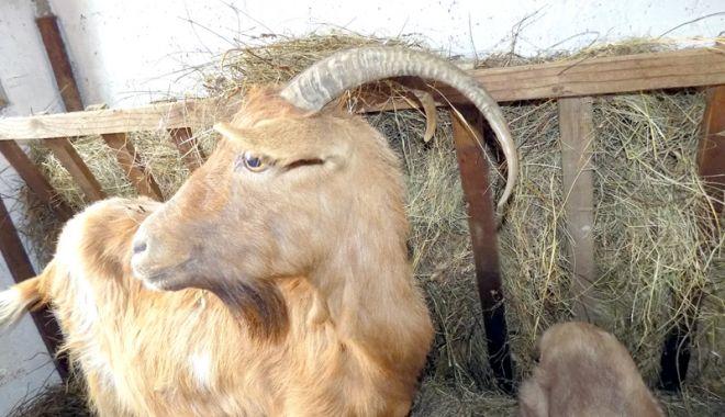 Foto: Şi animalele trebuie protejate de frig! Iată ce trebuie să faceţi