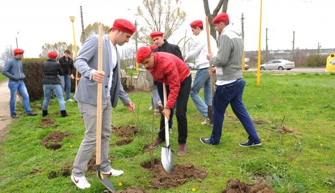 Foto: Tinerii din PSD Constanţa au plantat 250 de salcâmi