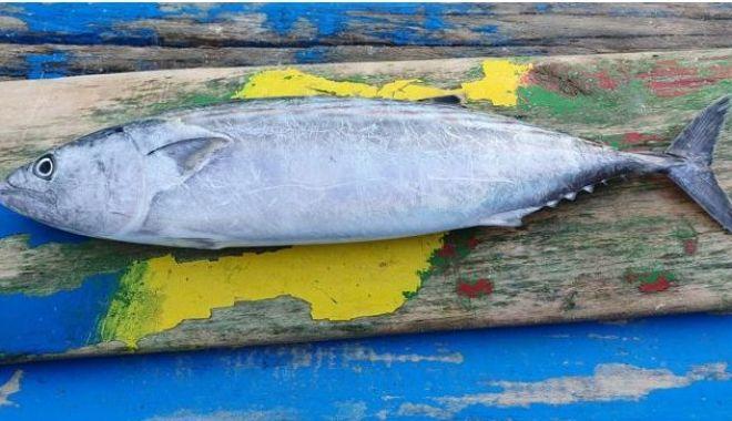 Apel la pescari să anunţe când prind specii de peşti neobişnuiţi în Marea Neagră - apellapescari-1602782230.jpg