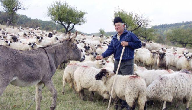 Foto: APIA efectuează plata ajutorului de stat pentru ameliorarea raselor de animale