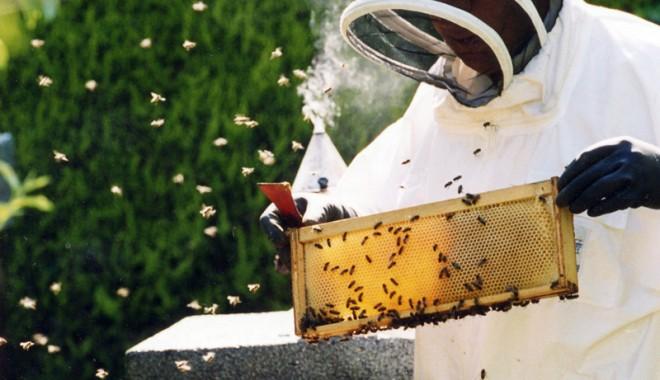 Albinele şi-au scos banii. Producţii mari de miere, în judeţul Constanţa