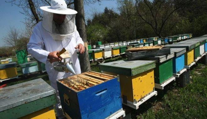 Apicultorii pot depune cereri de intenţie la APIA - apicultoriipotdepune-1621270604.jpg