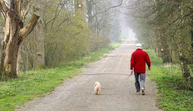 Foto: Termenul limită pentru microciparea câinilor cu stăpân  ar putea fi prelungit