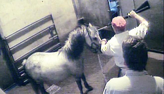 Foto: Foto şocant! Iată cum sunt ucişi caii în abatoarele din Marea Britanie