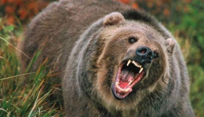 Foto: Femeie atacată de un urs în propria gospodărie. Soțul a ucis animalul cu toporul