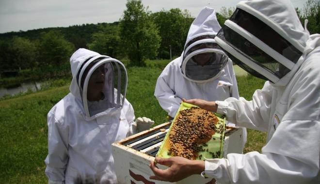 Foto: Atenţie apicultori: se depun cererile pentru finanţare