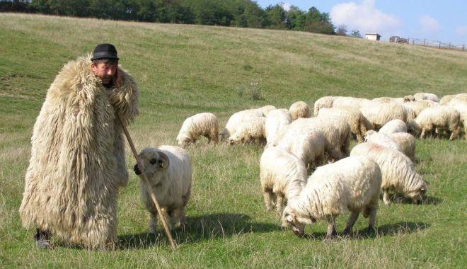 Foto: Atenție fermieri! Iată ce plăți se efectuează!
