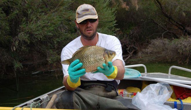 Foto: Atenţie la peştişorul de aur!