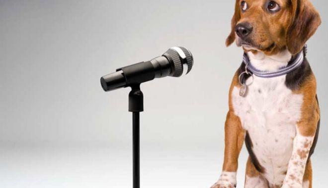 Atunci când câinele e dresat de lăutar… - atunci-1582581770.jpg