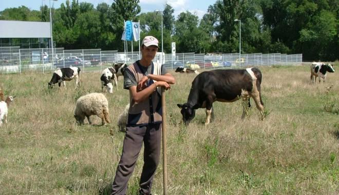 Foto: Au fost aprobate ajutoarele naţionale tranzitorii în sectorul zootehnic