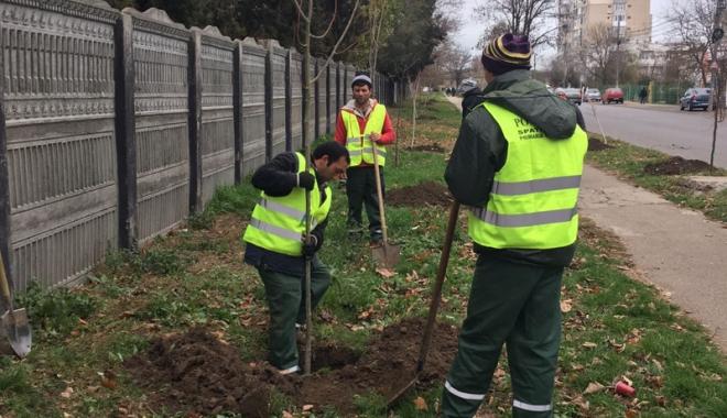 Au început plantările de iarnă, în Constanța - auinceputplantarile1-1480008921.jpg