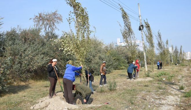 Foto: Au început plantările de toamnă, la Constanţa