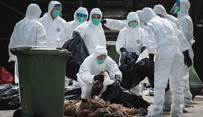 Foto: Alarmant! A apărut o nouă tulpină de gripă aviară, semnalată