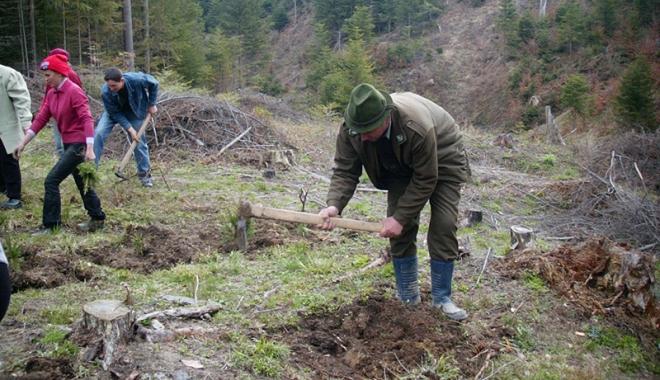 Foto: Stop tăierilor ilegale! Bani de la stat pentru paza pădurilor private