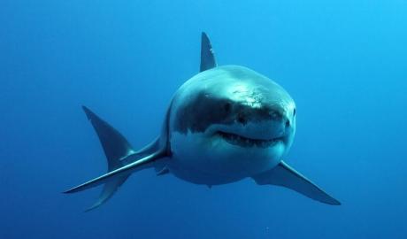 PE CE LUME TRĂIM? Cum au reușit trei hoți să fure un ... rechin