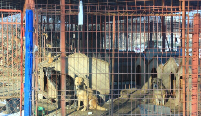 Câinii comunitari au reapărut prin cartiere.  Primarul Constanţei promite un nou adăpost modern - biobazacainifarastapan6-1486399155.jpg