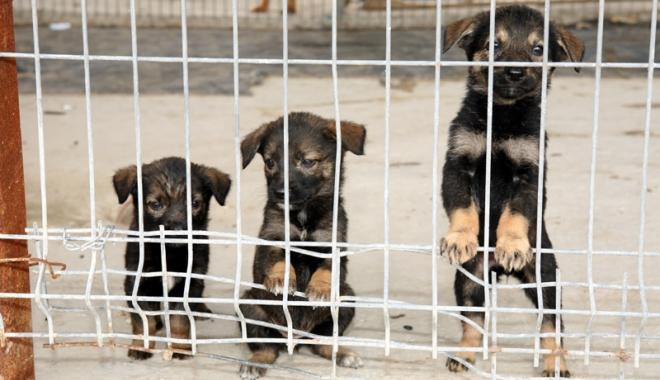 Foto: 400 de câini pe lună, norma hingherilor la Constanţa. Maidanezii vor avea site de promovare