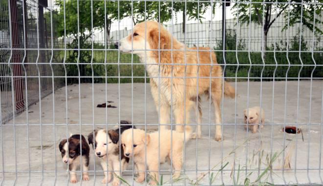 Foto: Primăria Constanţa caută voluntari pentru câinii fără stăpân
