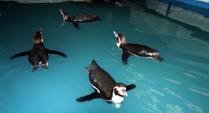 Foto: Pinguinii de la Delfinariu au fost botezaţi